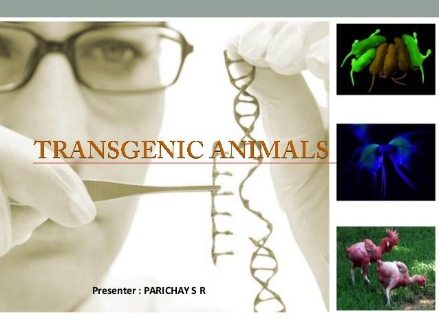 Trans-Animals